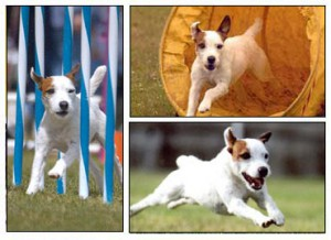 agility_collage