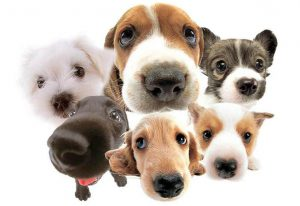 cropped-dogs61-1.jpg