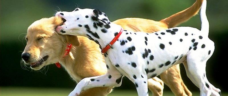Tanums Brukshundklubb